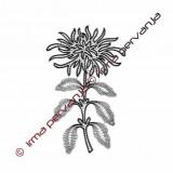 502501 - Chrysanthemum - 25 cm