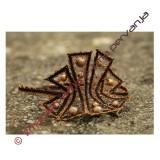 139504 - Vzorec za zapestnico - 17,5 cm